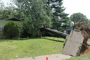High winds knocked over a tree in Bristol Township in 2014. Credit: Tom Sofield/NewtownPANow.com